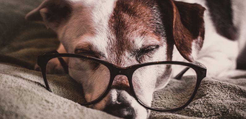 Le tapis parfait pour vous et votre chien